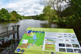 L'étang du Petit Vioreau à Joué-sur-Erdre